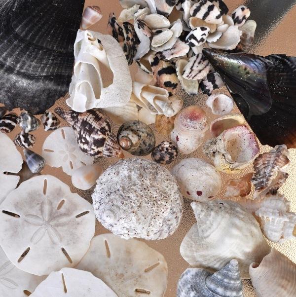 july4_shells